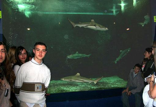 observation des requins pointe noire ?laquarium Dubuisson permet ...