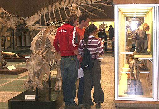 Observation, dans la salle des mammiferes dumusee de zoologie, de l ...