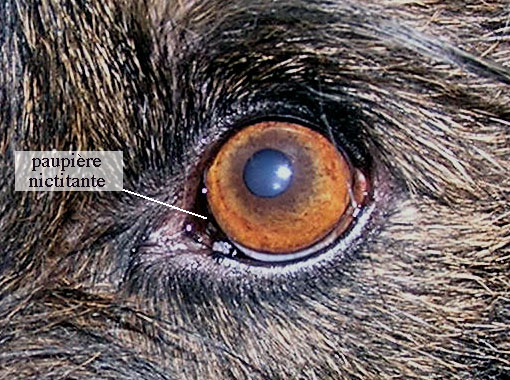 langage yeux clignement