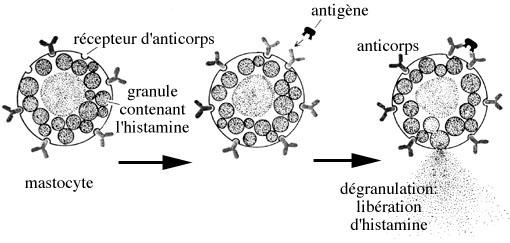 fibrinogène eleve cause