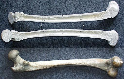 exemple de os