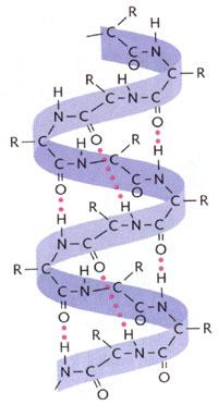 protéine structure quaternaire