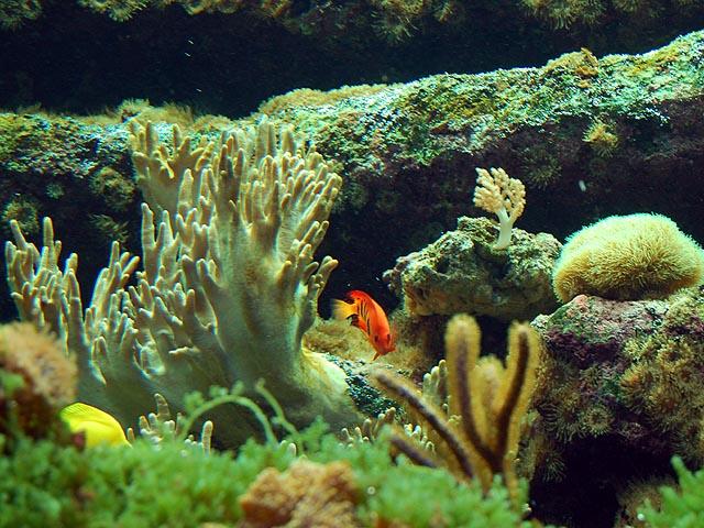 aquarium Dubuisson presente des bassinsdeau douce ou de mer, des ...