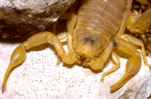 Conseils Pour La Datation DUn Scorpion Mâle.