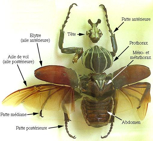 insecte volant vert maison ventana blog. Black Bedroom Furniture Sets. Home Design Ideas
