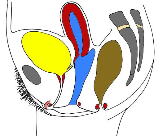 le clitoris cest la vie